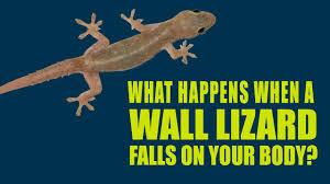 lizard falls on body